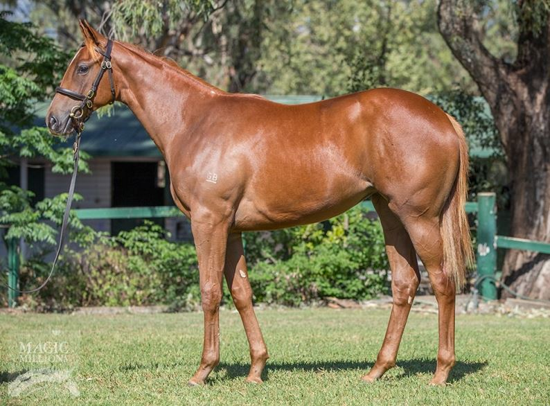 Filly by Snitzel x Tripled – join MB Team